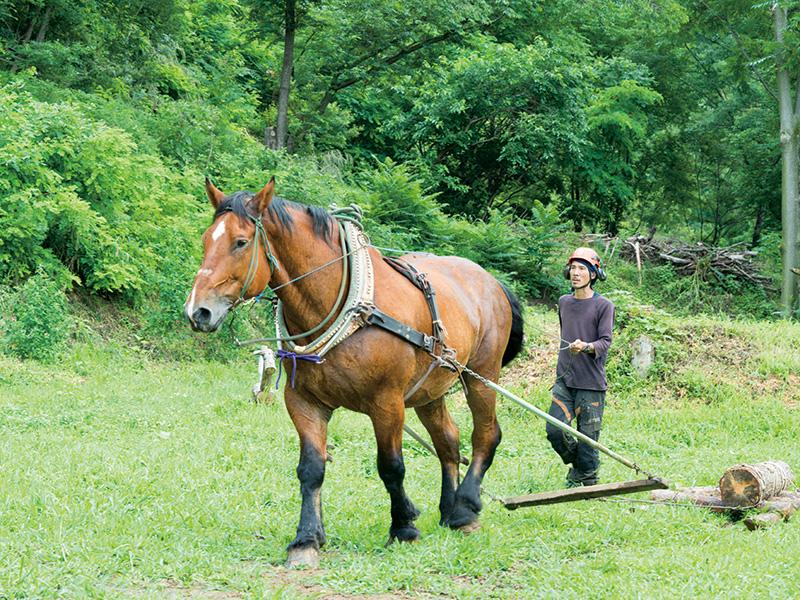 """馬搬」に見る地域づくりのヒントとは? 馬とともに""""理想の林業""""を ..."""